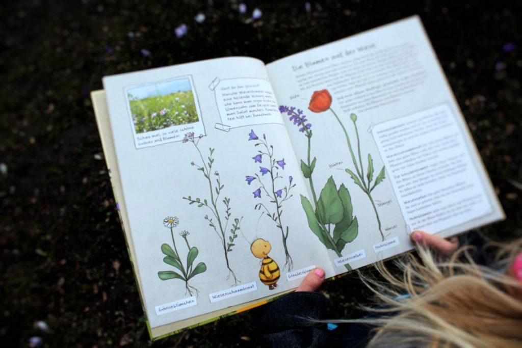 Eine Seite aus Die kleine Hummel Bommel entdeckt die Wiese: Wiesenblumen