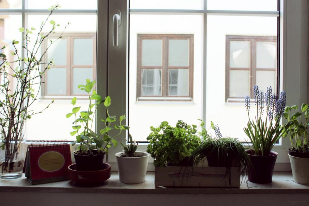 Küchenfenster mit Blumen und Kräutern