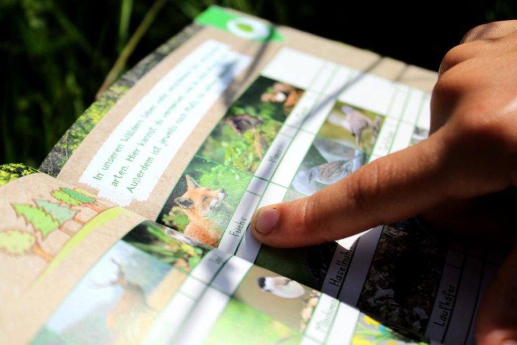 Seite aus dem Naturforscher-Mitmachbuch von arsEdition