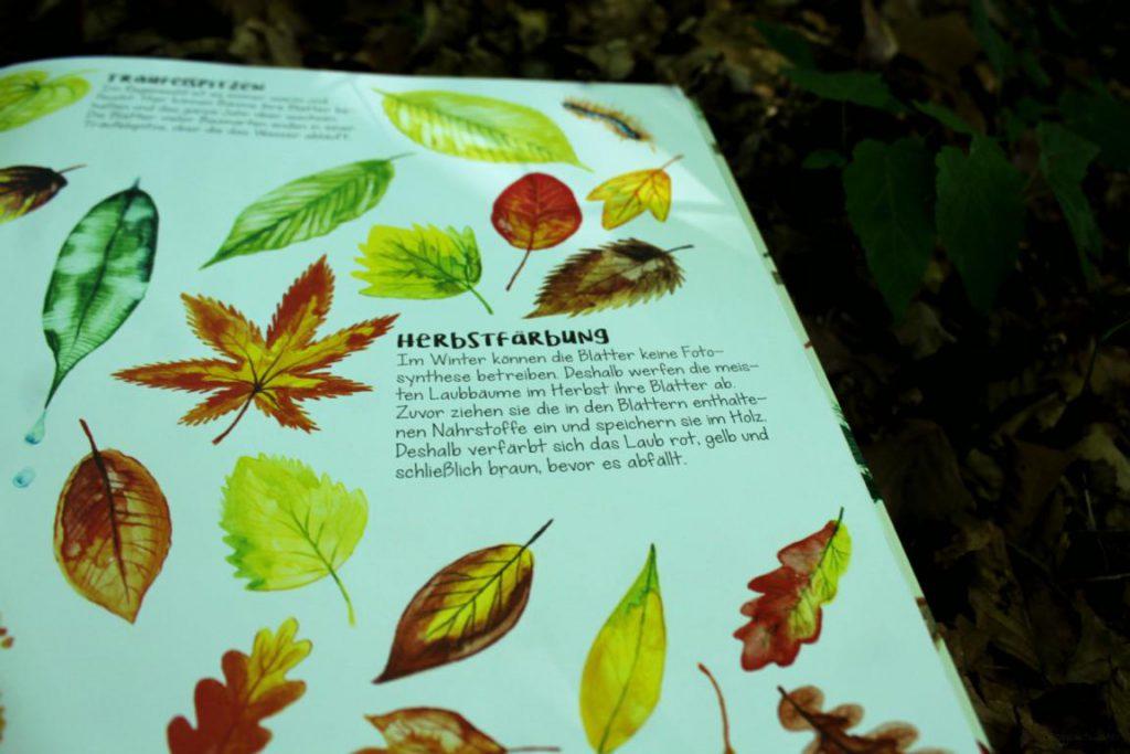 Seite Herbstfärbung aus das Wunder der Bäume