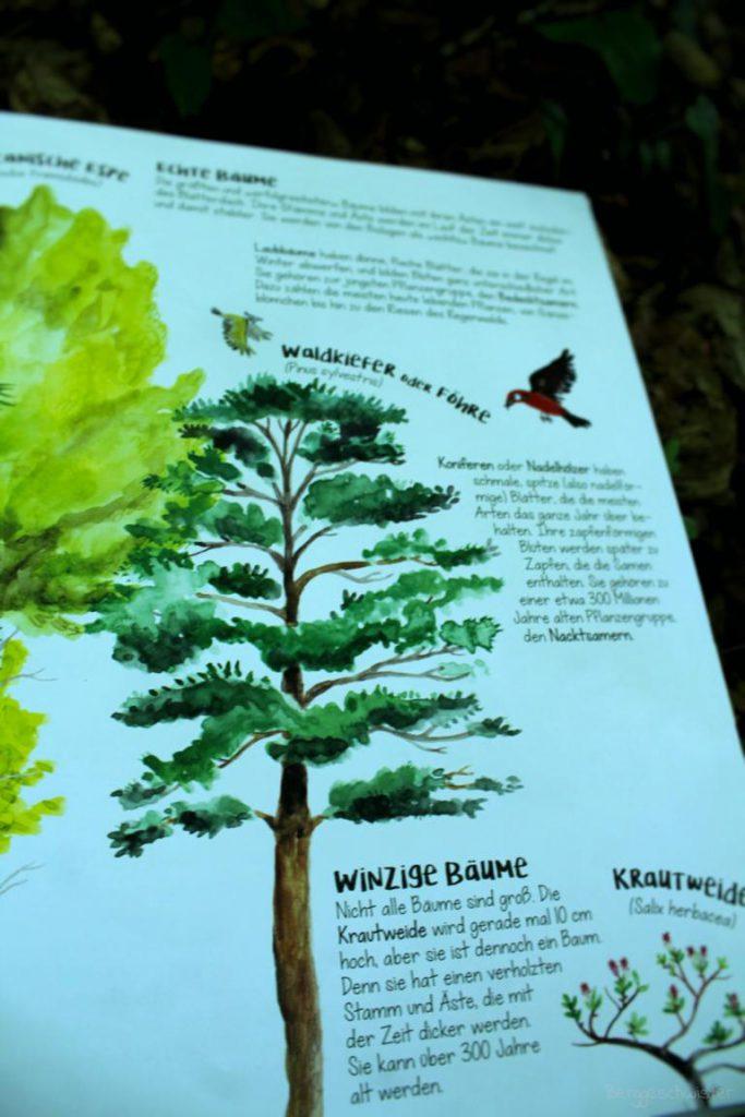Seite aus das Wunder der Bäume