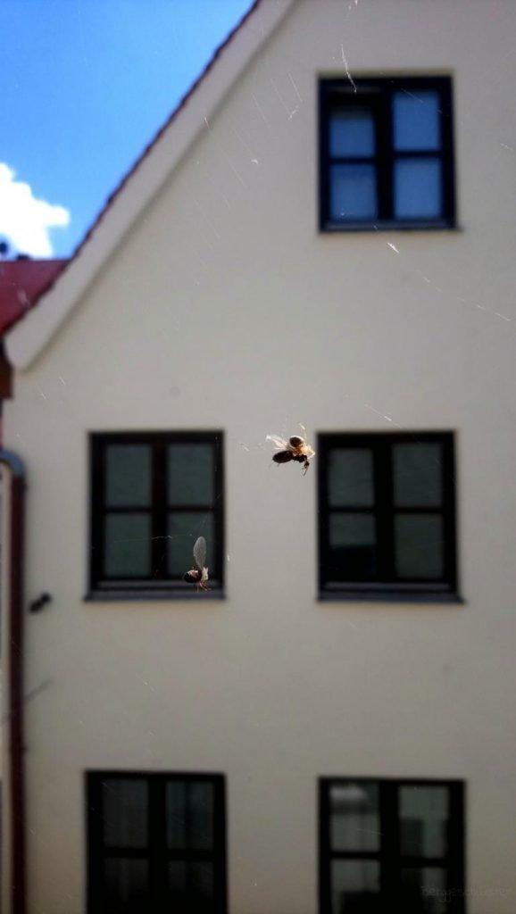 Spinne vor dem Fenster