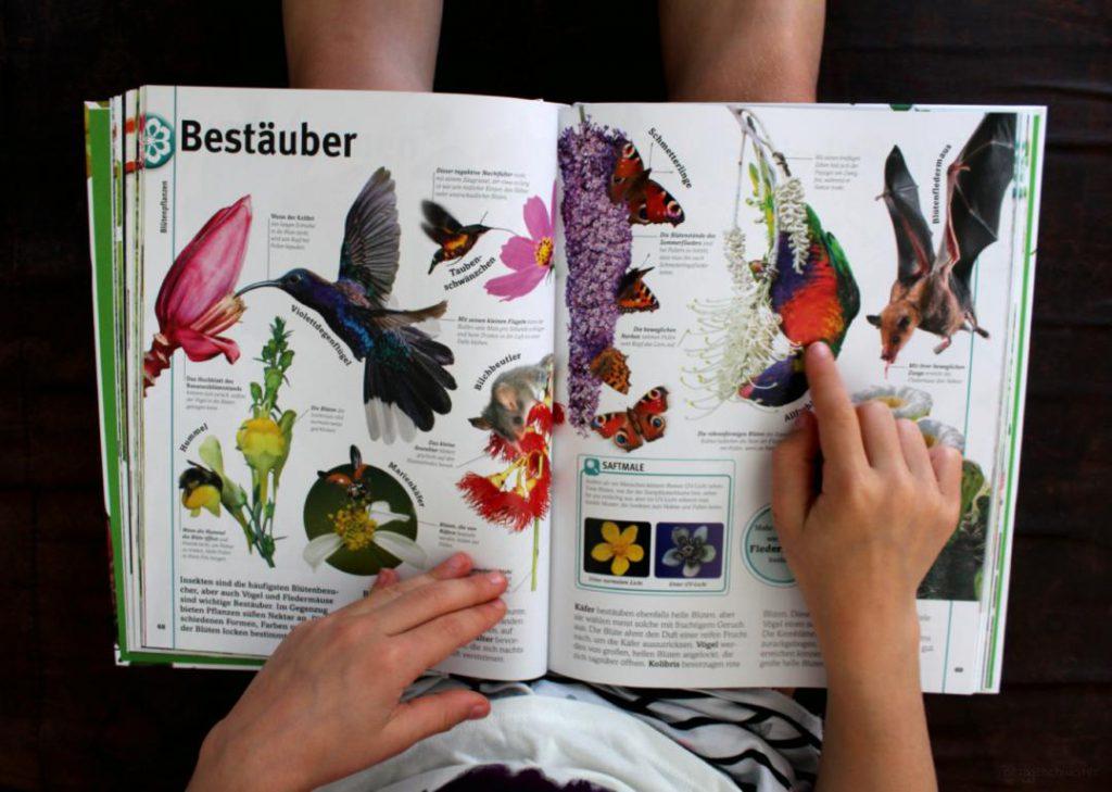 Seite aus Pflanzen vom DK Verlag