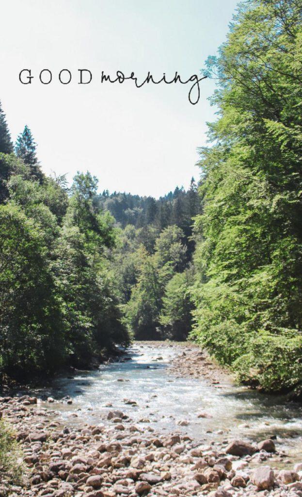 Fluss mit vielen Bäumen
